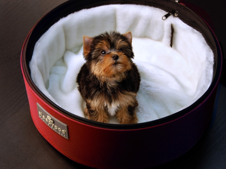SP-RED+SPUP-WHT-yorkie