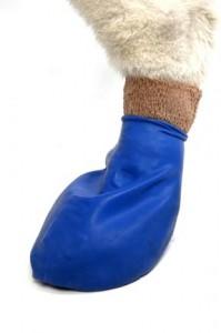 medium-dog-in-bandage-199x300