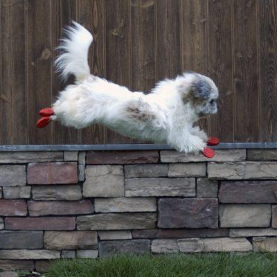 Pawz Hundesokker