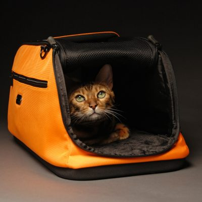 Reiseutstyr for hund og katt