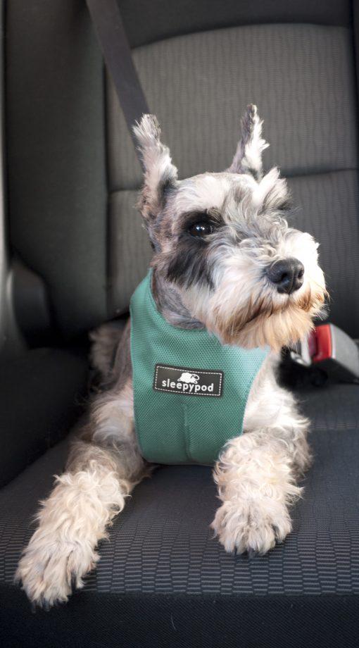 Sikkerhetssele til hund bilsele turkis sleepypod