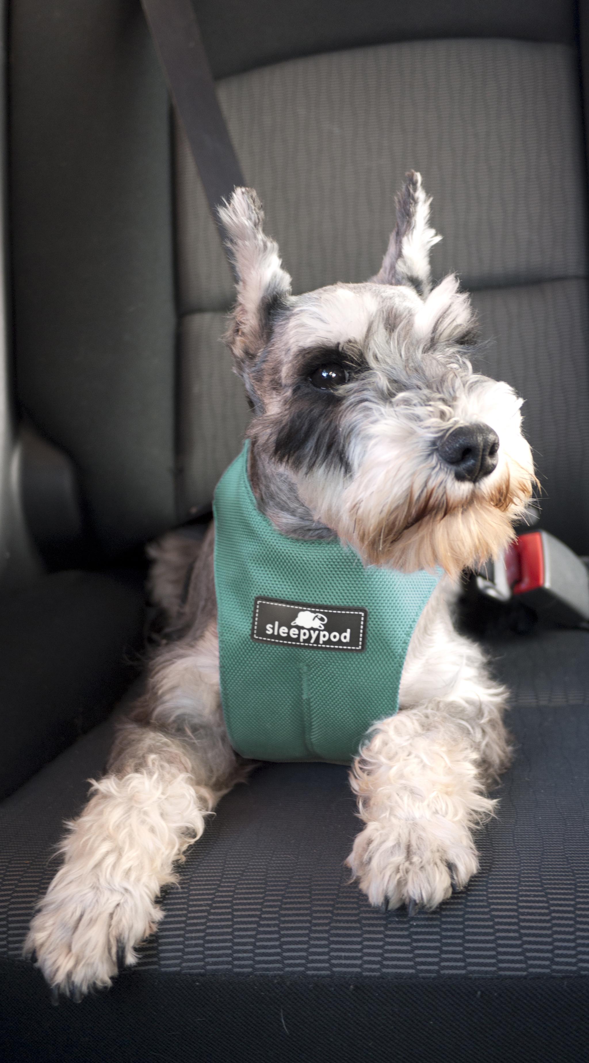 Hund med Sleepypod 3-punktsväst Bilbälte i bilen