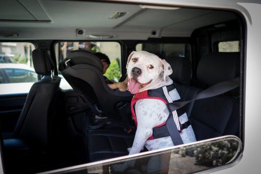 Bilsele til hund fra SleepyPod