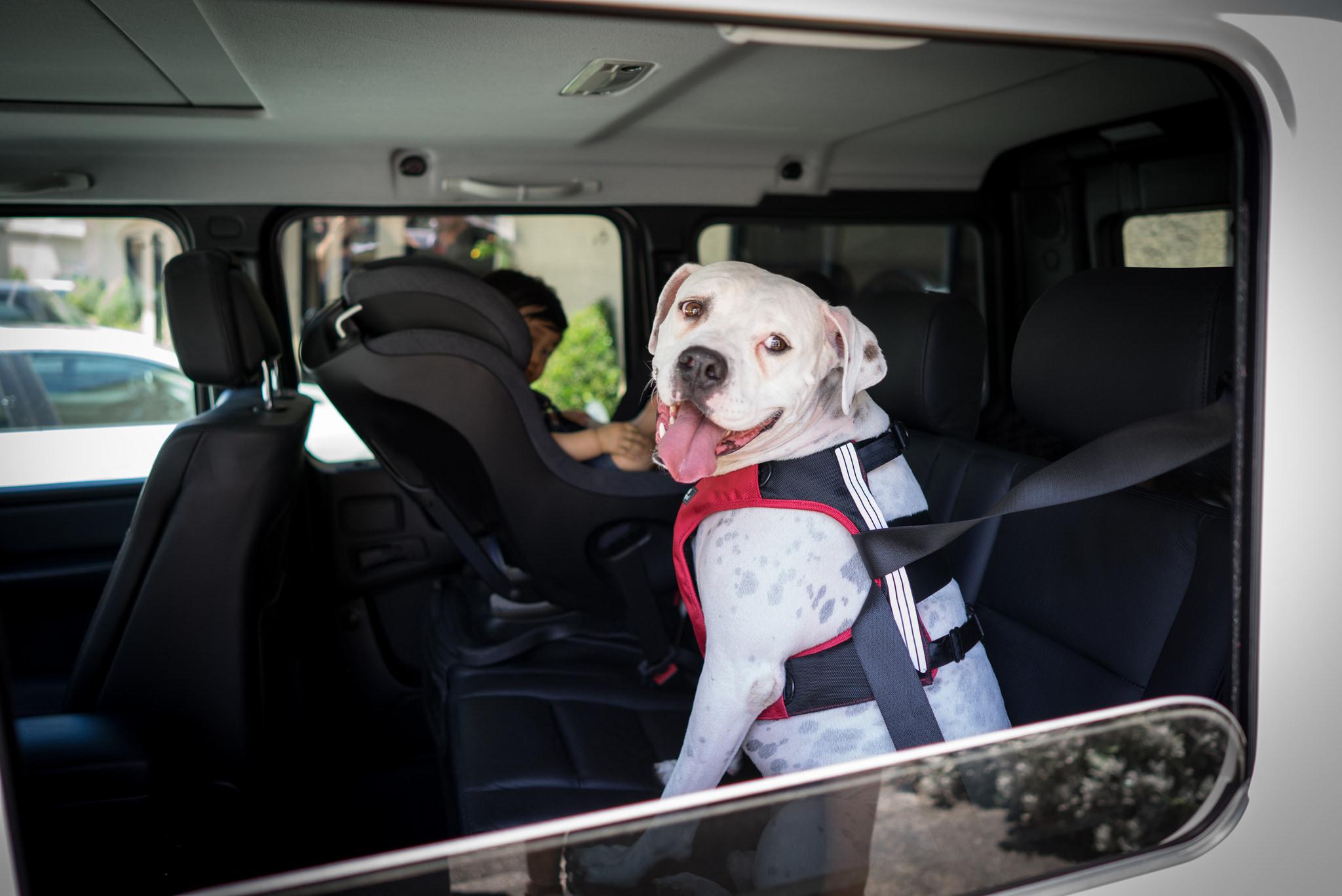 Helt nya bilsele til hund, SleepyPod Terrain - kollisjonstestet med EH-16